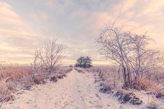 Snowy winter landscape with a path - stock photo
