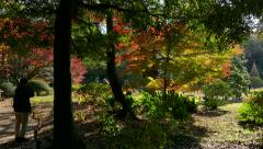 Rikugien Garden In Tokyo Japan Asia Fall Autumn Trees Leaves - stock footage