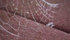 Spiderweb Covered in Dew Connected to Boards - stock footage