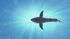 4K Great White Shark in the Ocean Low Angle 1 Stock Footage