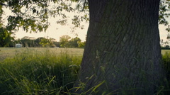 Under An English Oak Tree At Sunset - stock footage