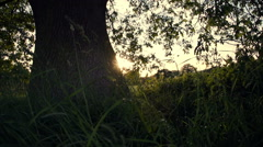 Under An English Oak Tree At Sunset Stock Footage