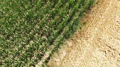 Cornfield - aerial video  Stock Footage