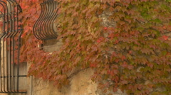 House with red ivy plant in Tourrettes-sur-Loup Stock Footage