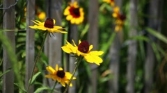 Yellow Flowers Blooming On Governors Island Stock Footage