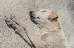 Homeless stray dog. Stock Photos