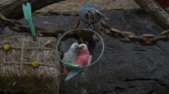 Two parrots statues swinging in an iron circle in Vence Stock Footage
