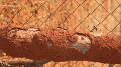 Dry Tree Texture Stock Footage