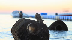 A mangrove heron sitting on a rock on the shore of the Red Sea Stock Footage