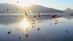 Seagulls landing on the surface of the sea and catch a fish Stock Footage
