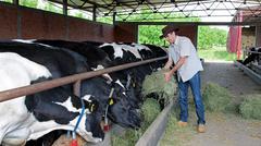 Stock Photo of Farmer Feeding Cows