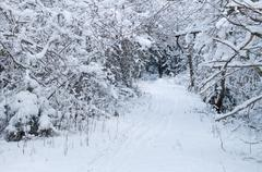 Narrow pathway through winter forest - stock photo