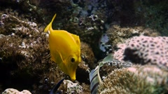 4K, Colorful Fishes, Seahorses, Corals, Marine Life, Underwater World Stock Footage
