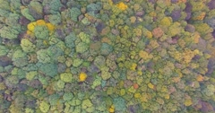 Colorful Autumn Trees Tops 4k Stock Footage