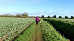 Woman walking two dogs in the countryside. - stock footage