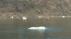 Whale breaching in calm Greenlandic waters Stock Footage
