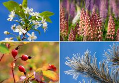 Collage of four seasons Stock Photos