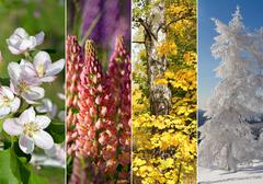 Collage of four seasons - stock photo