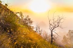 Stock Photo of Misty dawn over the Valley and the forest. Alone small tree