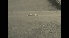 Vintage 16mm film, 1934, Ontario, woman rolling down hill, rather silly Stock Footage