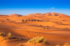Camel caravan going through the sand dunes in the Sahara Desert, Merzouga, Mo Stock Photos