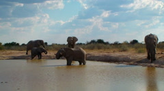 Elephant family entering pool and bathing Africa Stock Footage