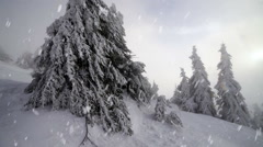 Winter snow storm blizzard, fir trees full of snow, ice frost on plants  - stock footage