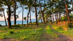 Sea view through the zooming pine trees glowing in sunset light in a summer - stock footage