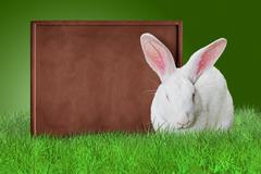 Chocolate board and white bunny - stock photo