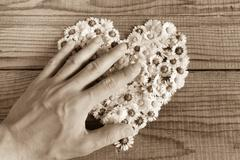 Heart made of daisies flowers in wooden background, covered by an hand to rep - stock photo