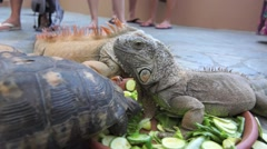 Lizard and turtles eating vegetables- tourists attraction Stock Footage