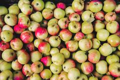 Close up of pile of apples Stock Photos