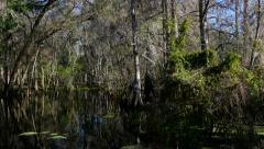 Florida Swamp Stock Footage