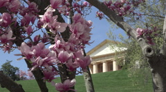 Arlington National Cemetery beautiful springtime blossoms headstones HD Stock Footage