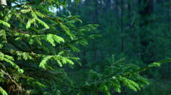 The branches of trees swaying in the wind in the forest summer. Stock Footage
