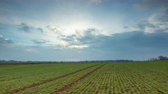 4k timelapse of dark clouds moving over young green field of rye Stock Footage