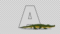 Letter A and Alligator (foreground) Stock Footage
