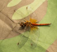 dragonfly on camouflage canvas - stock photo