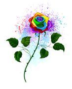 rainbow rose - stock illustration