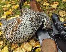 hazel grouse - stock photo