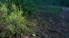 In summer forest heather sways in the wind. Stock Footage