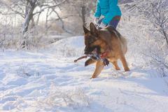 Girl walks her German Shepherd dog Stock Photos