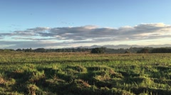 Birds in the morning at farmland Stock Footage