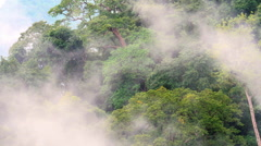 Clouds of mist move above evergreen forest in Southeast Asia - stock footage