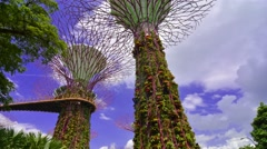 Time lapse of Supertree in Marina by the gardens. Singapore. Low angle. Stock Footage