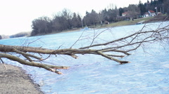 Fallen Tree near livingplace of Beavers  - stock footage