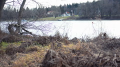 Living place of Beavers on  River Side Stock Footage