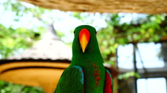 Parrot green - stock footage