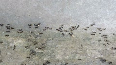 Ants collecting food Stock Footage
