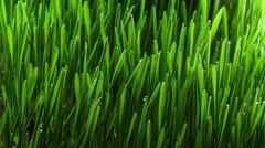 Growing green grass plant 4k - stock footage